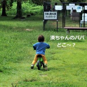 ドッグラン ★こぐま組が来た~♪★