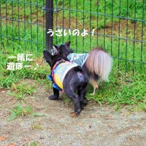 ドッグラン ★ジン vs チコの戦い勃発か…?★