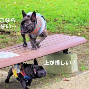 ドッグラン ★ジンチコが大型犬に勝負を挑むのだ!★