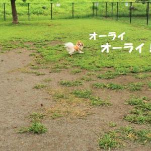 ドッグラン ★ジンはプロ野球を目指す!(らしい…)★