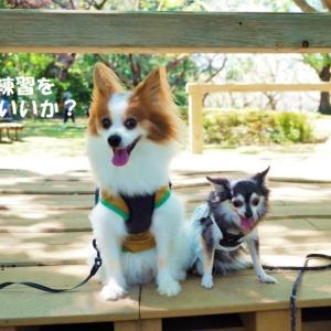 大庭城址公園で散歩 ★ジンチコのオータムコンサート♪★