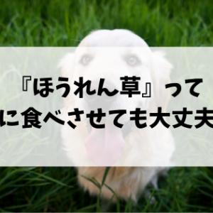ほうれん草って犬に食べさせても大丈夫?与え方の注意点