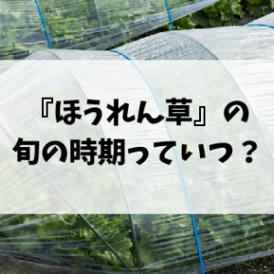 ほうれん草の旬の時期はいつ頃?冬場に食べたい野菜