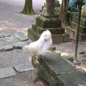 石上神宮に参拝