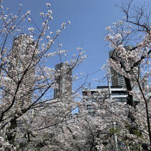 散歩でもするしかないですね。桜、高層ビル、月。