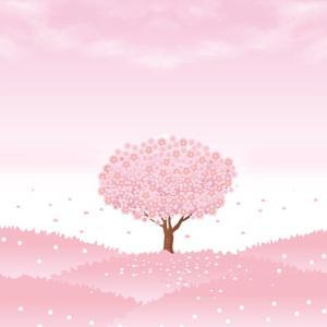 平日休みの魅力 今日はバイクで桜を見に行きました