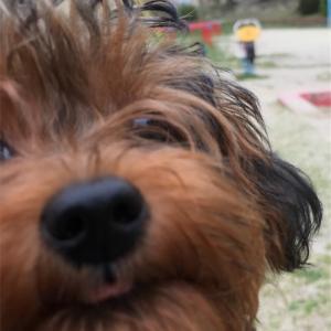 日本ではどれくらいの人が犬を飼っているのでしょうか?