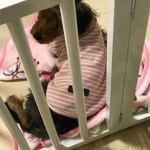 まだまだ成長中!仔犬の5か月までの体重推移 → 精神的な成長へ期待