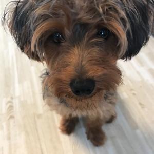 うちの仔犬が生後6か月を迎えて、最近の変化と今後、気を付けることは?