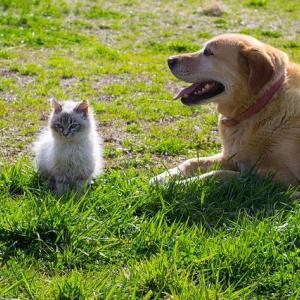 犬、猫、好きですか?