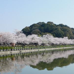日曜日の写真館★さぬき市の亀鶴公園で桜鑑賞してきました。