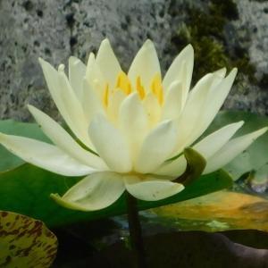 今週のエネルギー画像★そっと咲く白い花の花のエネルギー。