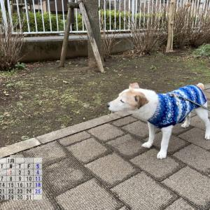 2020年 1月のカレンダーと完成披露!(^^)/