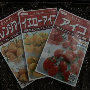 夏野菜の播種。