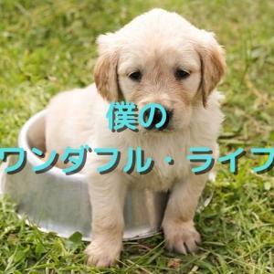 動物好きにおすすめ!イーサンの犬とは?映画「僕のワンダフル・ライフ」