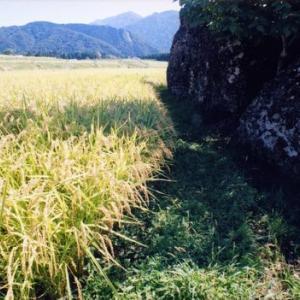 BUKUISHI6/14