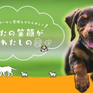 健ドッグで犬にコラーゲンを与える効果は?アミノ酸に分解するだけ?