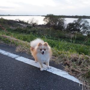 利根川堤を歩いて.....