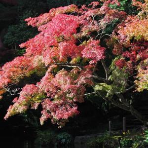 成田山公園の紅葉(2)