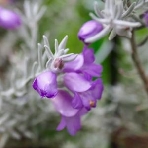 庭の花チェック
