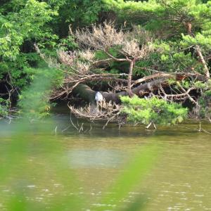 のんびり、坂田ヶ池