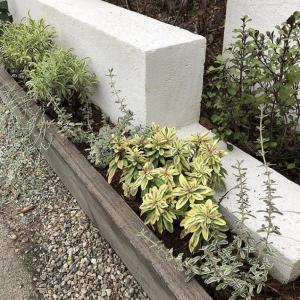 手間いらずの庭|ユーフォルビア、コプロスマ、エリンマム【斑入り植物】