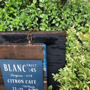 手間いらずの庭|ラミウムでグランドカバー【耐寒性多年草】
