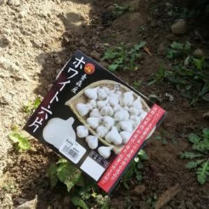 天皇賞秋、ラグビーW杯と畑です。
