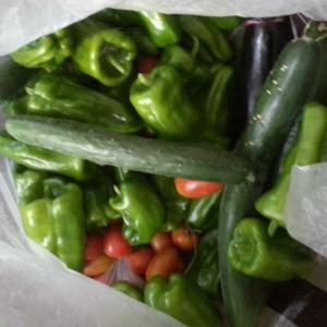いよいよ夏野菜もしまいです。そして秋野菜へ