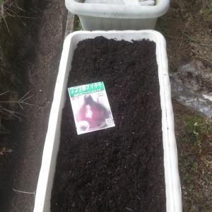 玉ねぎを蒔種しました
