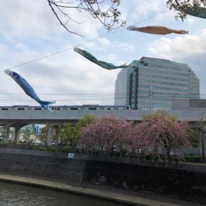 桜と鯉のぼりと相鉄線