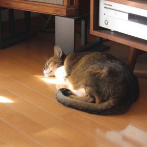 ジョアン・ジルベルトを聴きながら眠る猫