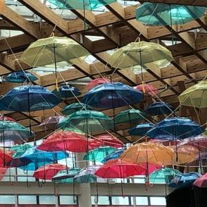梅雨入りが楽しい?