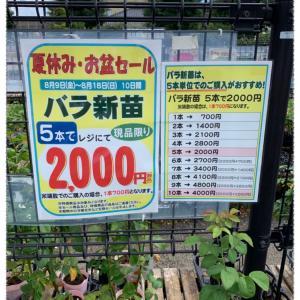 京成バラ園デビュー(ショップ編)