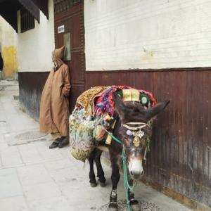 モロッコ フェズ① 古代と現代が交錯する街(HISツアー8日間)