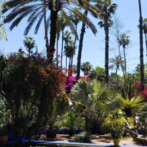 モロッコ マラケシュ① マジョレル庭園(HISツアー8日間)