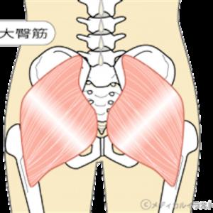 筋肉紹介〜大臀筋〜