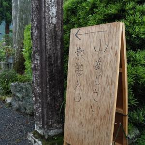 2020梅雨、静岡市葵区・長光寺のヤマアジサイ