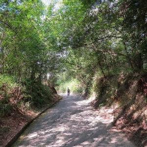 散歩 17000歩