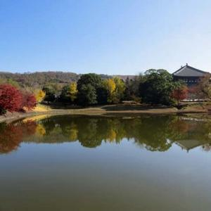 東大寺 大仏池 2 紅葉する大仏池 銀杏の樹は半分程に減ったが、池の傷みは修復されて居た。  (9景)