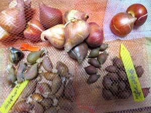 花の球根と種をいっぱい買いました^^ 昨日植えた球根は5種類、 蒔いた種は6種類 (13景)