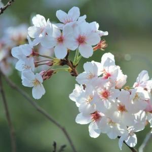 穏やかな日でありますように! Hope to have peaceful days!!