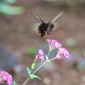 羽と翅 Wings on a feather