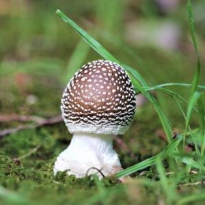 キノコのこのこキノコ  Mushrooms