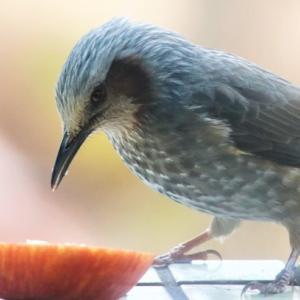 完全在宅 Bird Watcher