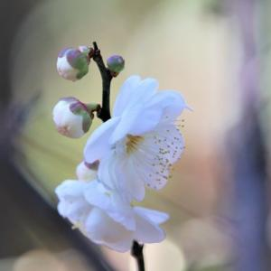 春よ、 Haruyo,