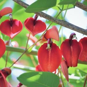 夢、栄光、汚れのない (花言葉) Vital Colour Flowers