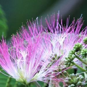 不思議の謎解き Flower Mystery