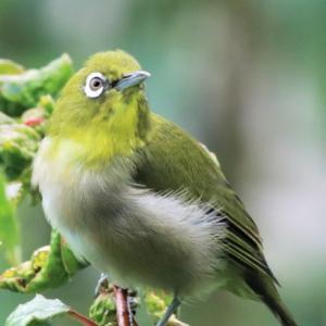 子鳥さんたちが騒がしくて・・・Little birds singing