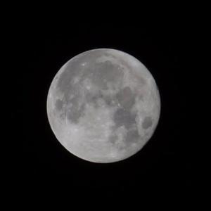 今夜は月光浴しながら寝よう